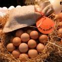 Huevos de Payés de Calaf