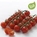 Tomate Cherry Ecológicos