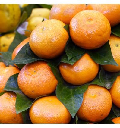 Mandarina Sanahuja