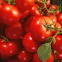 Tomate de Rama