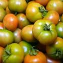 Tomate Verde Ensalada