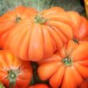 Tomates Cor de Bou