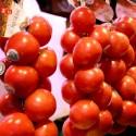 Tomates de Colgar