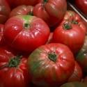 Tomate de Barbastro
